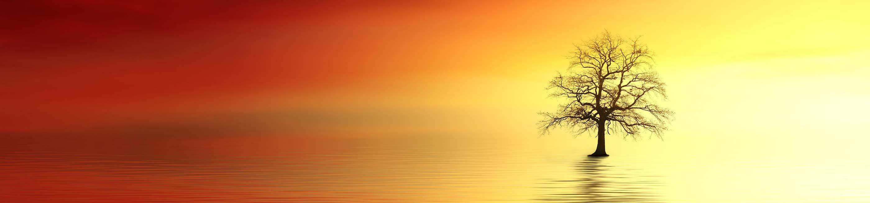 Calmness from Life Coaching